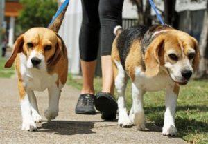 Идея бизнеса с нуля - выгул собак