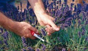 Идеи бизнеса в сельском хозяйстве
