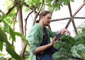 Выращивание зелени рентабельность