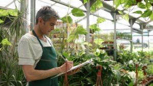 Бизнес на выращивании зелени, оформление